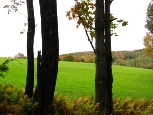 tree threshold